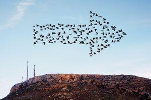 Birds flying in arrow formation above aerials.