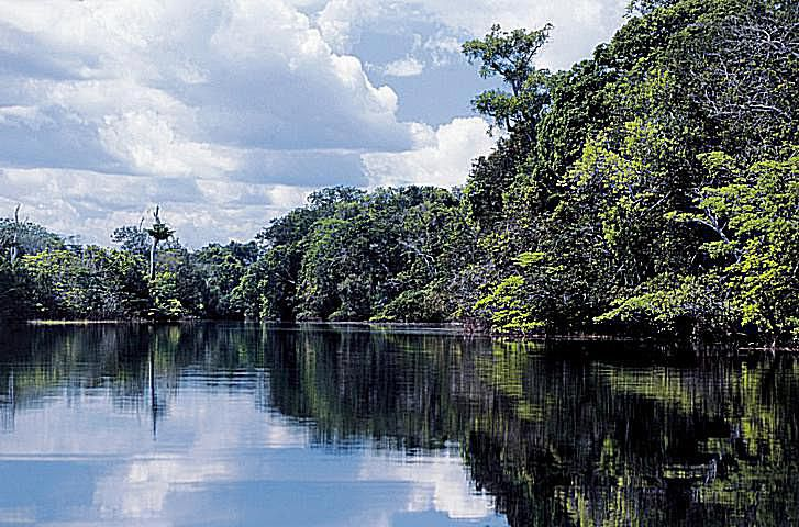 Megadiversity in Brazil