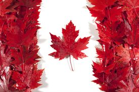 Canadian flag made out of maple leaves