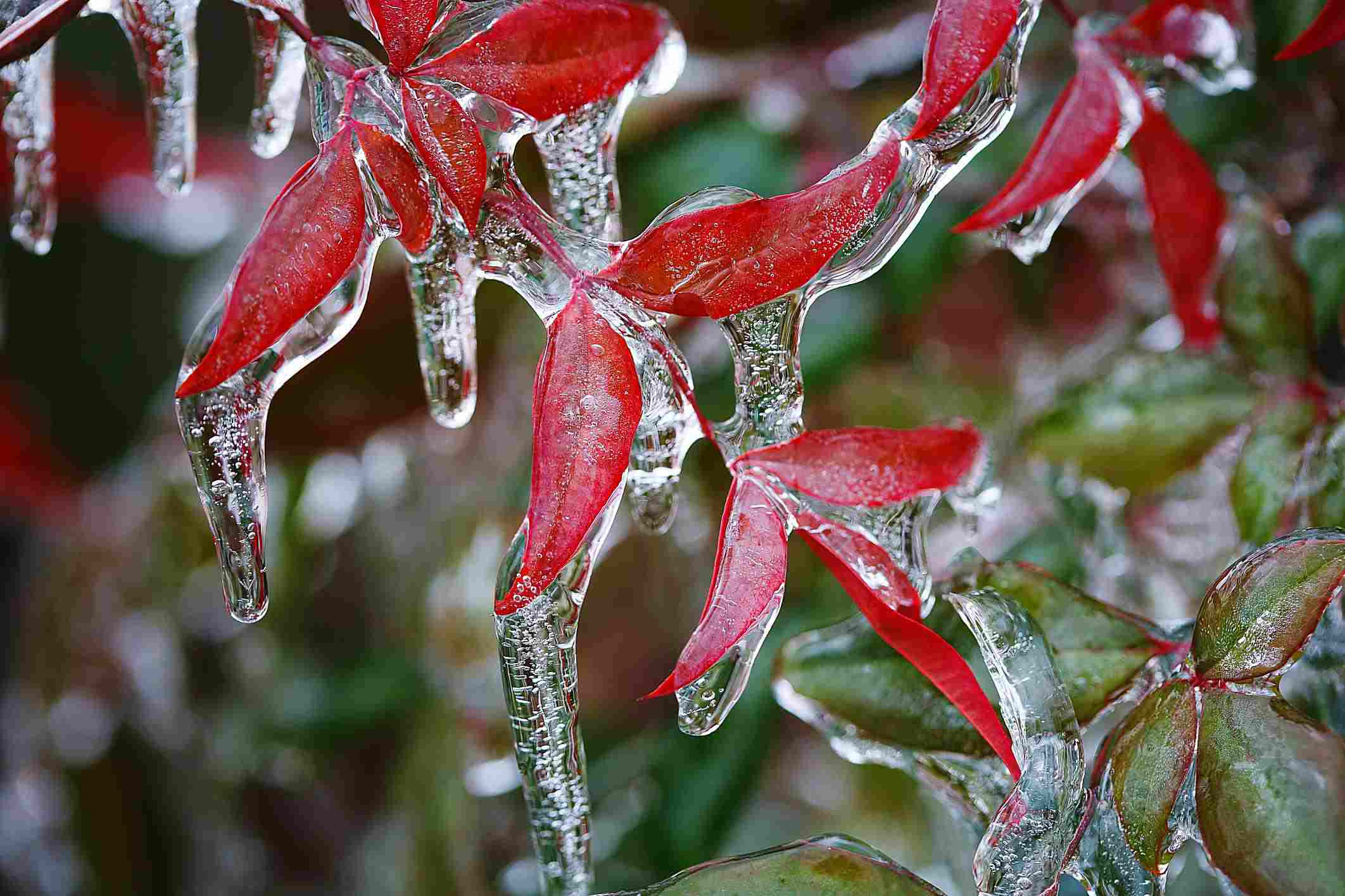 παγωμένα βροχή