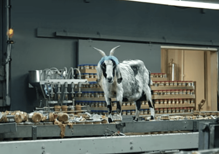 the 15 most hilarious screaming goat videos