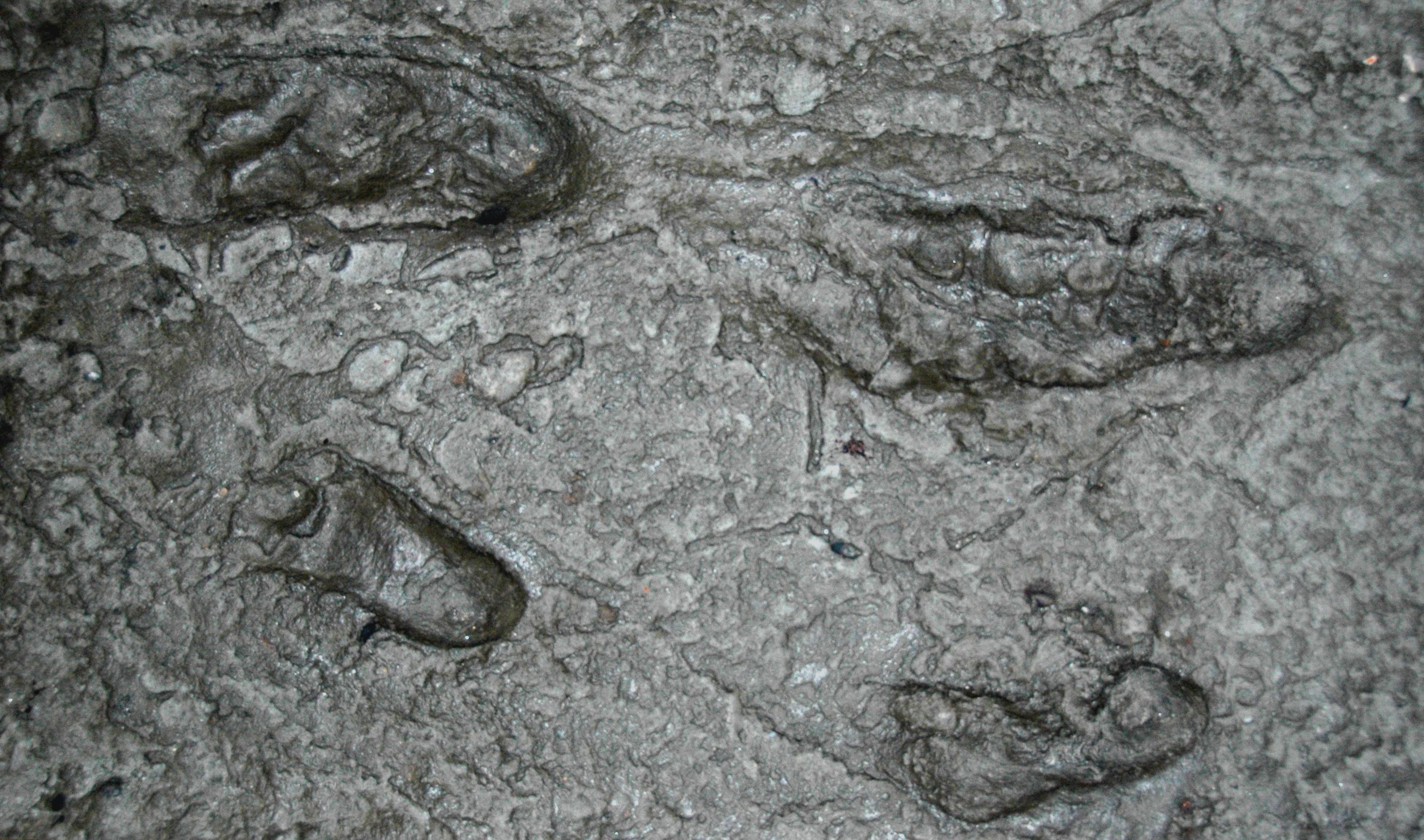 Who Made the Oldest Known Hominin Footprints at Laetoli?