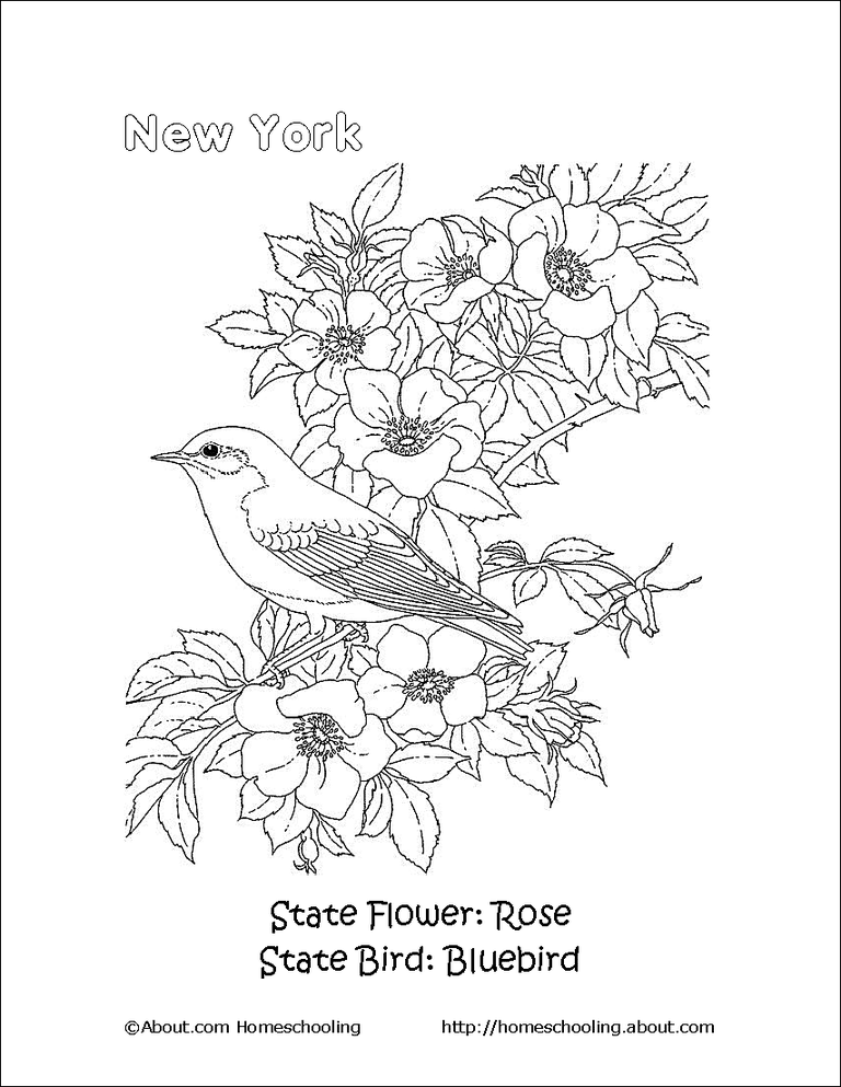 New York State Bird And Flower Coloring Page
