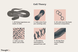 Illustration of cell theory