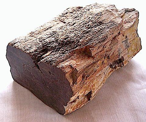 photo of petrified wood