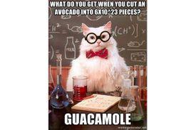 Chemistry Cat meme about moles.