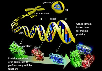 Genetic Variation Definition, Causes, and Examples