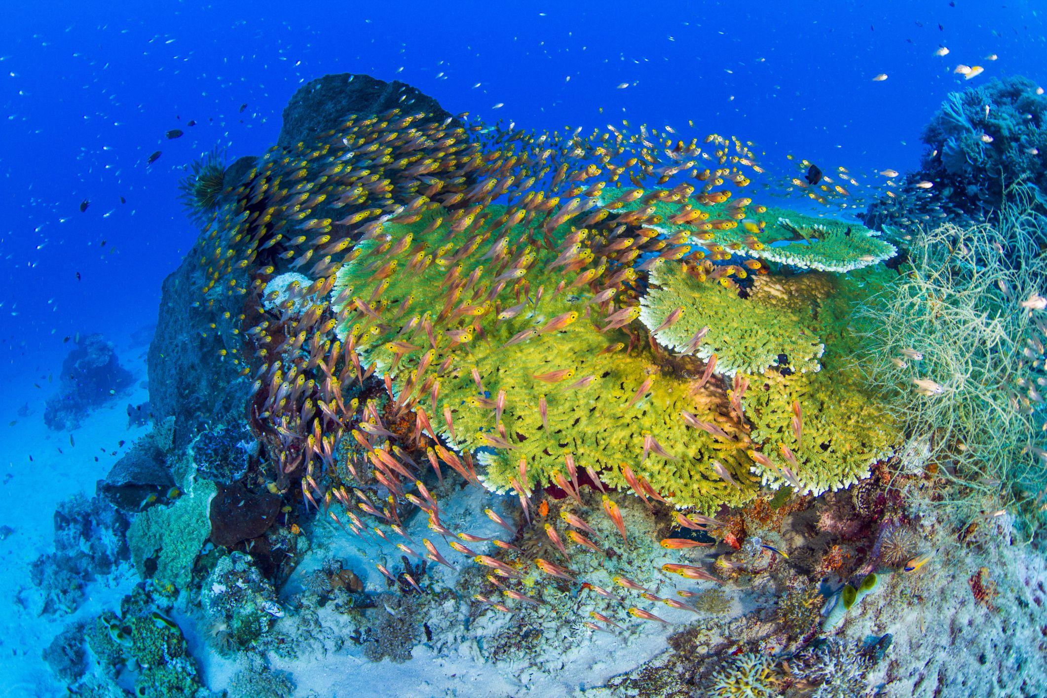 A school of fish swirl around a reef in a marine ecosystem