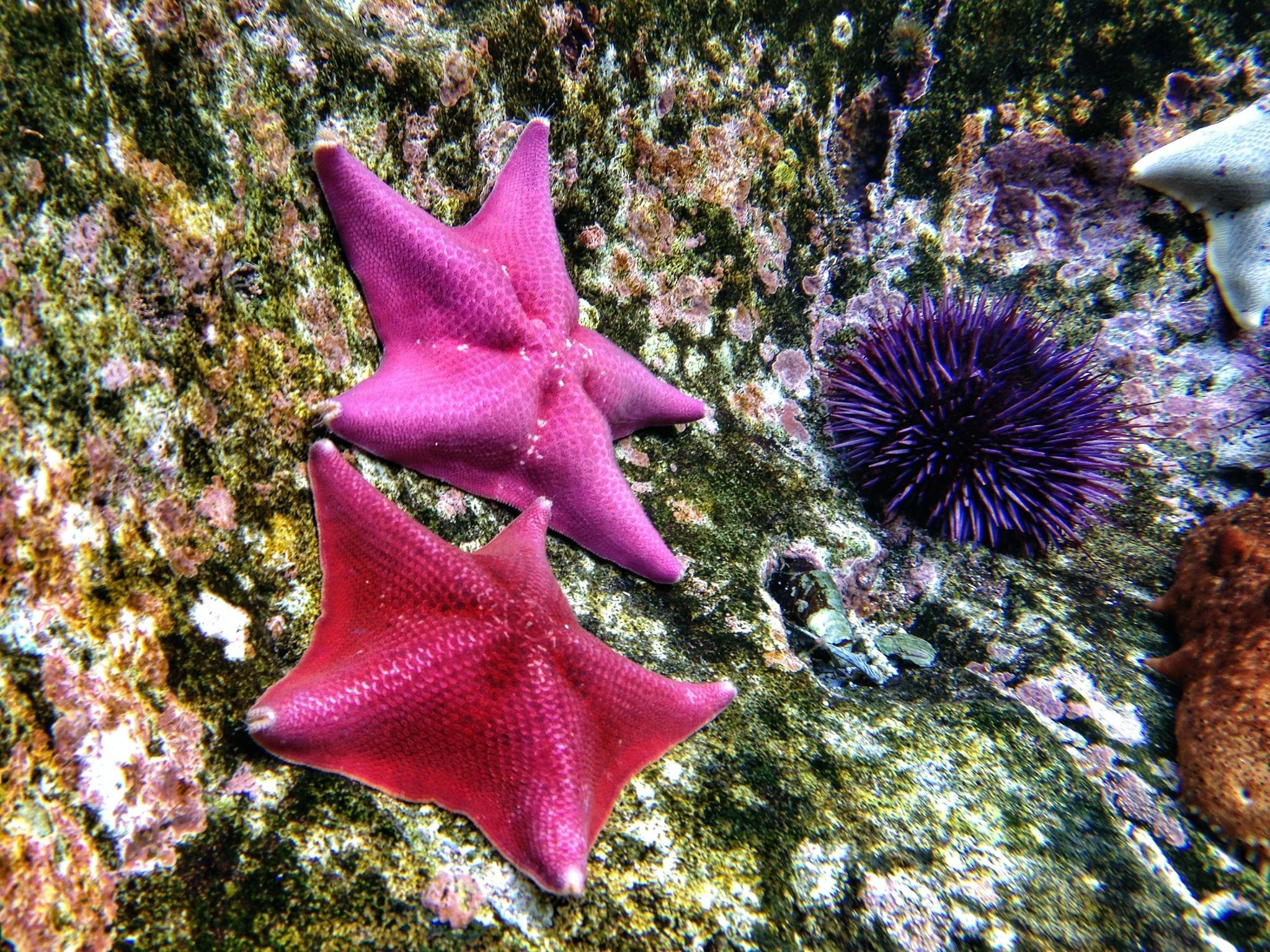 12 Surprising Facts About Starfish