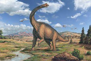 Brachiosaurus dinosaur