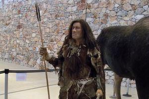 Museum display of homo sapiens, an ancient human.