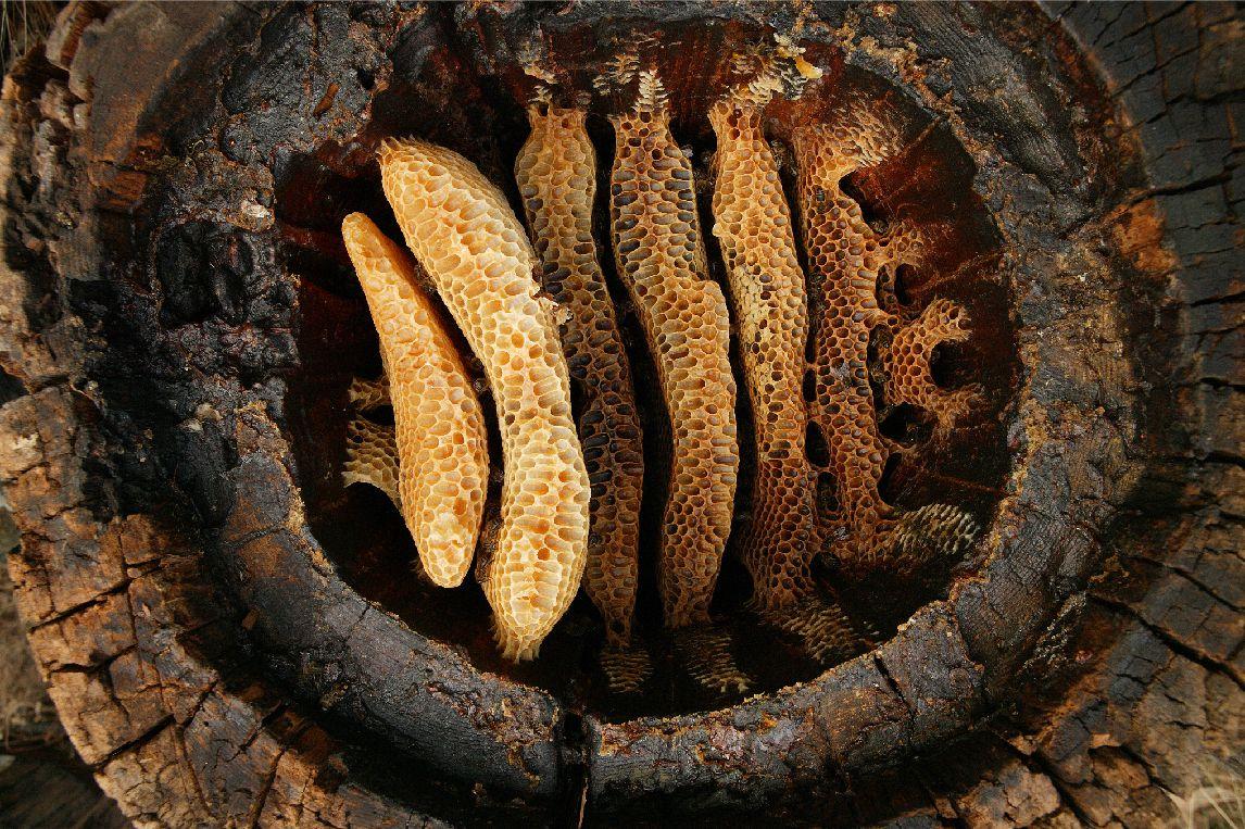 Чем отличаются осы от пчел фото памятники такого