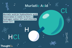 HCl molecule accompanied by a definition of muriatic acid: Muriatic acid (or hydrochloric acid) dissociates in water to form a hydrogen cation (H+) and chloride anion (Cl-).