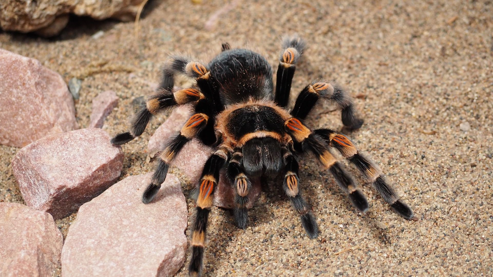 Comprehensive Information on Care and Feeding Housing The Tarantula Keepers Guide