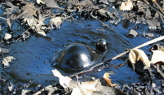 A bubble forming in bitumen at the La Brea tar pits in Los Angeles, California.