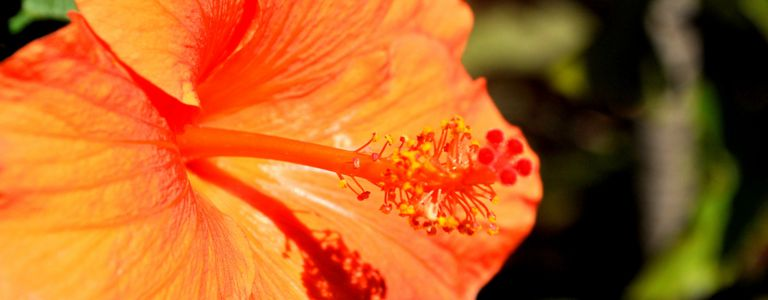 Parts Of A Flowering Plant Quiz