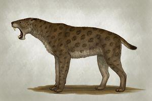 Homotherium latidens, a big sabertooth cat of the Pliocene Epoch