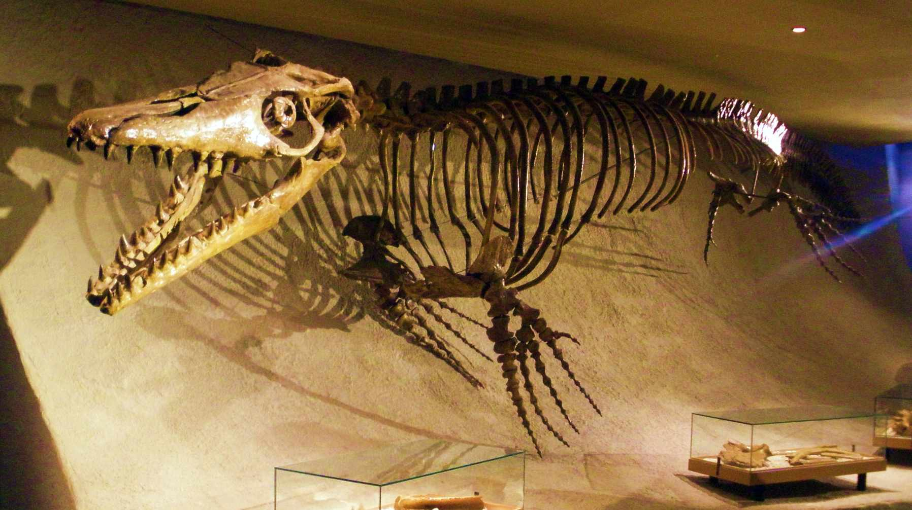 12 Famous Fossil Discoveries