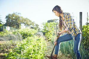 Young woman weeding in organic field