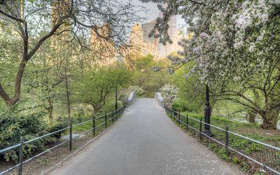 49f4642fdec Central Park South - A Walking Photo Tour of Common Park Trees