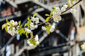 A flowering tree grows on the grounds of an abandoned factory