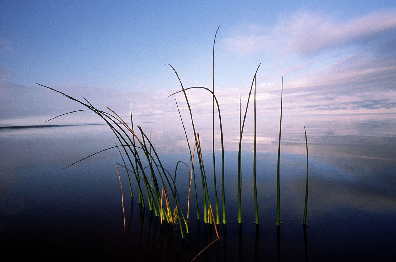 Upper Red Lake,Northern Minnesota,late summer