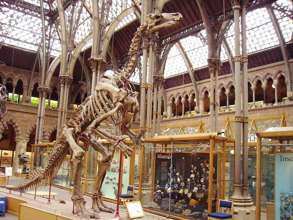 Complete Iguanodon skeleton at a museum.
