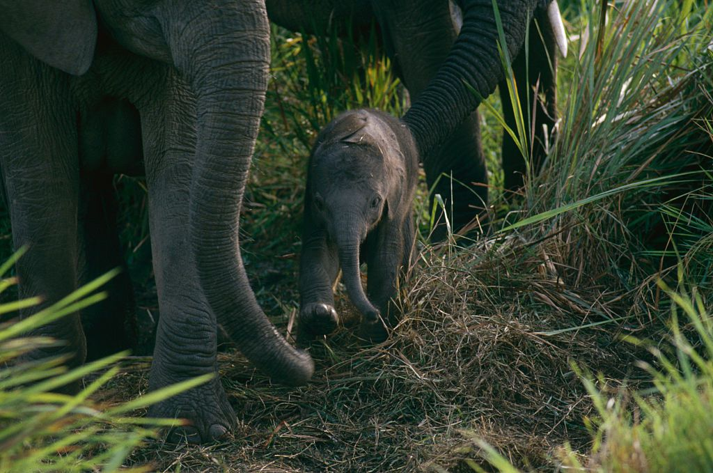 Baby Elephant at Virunga National Park