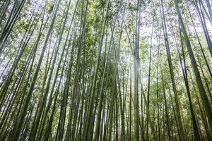 Bamboo grove, Arashiyama, Kyoto, Japan