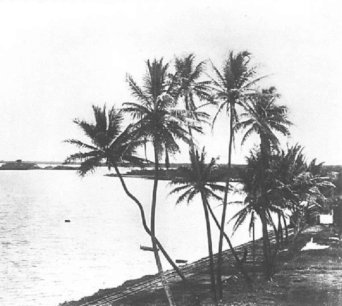 Palmeras por las aguas de Pearl Harbor