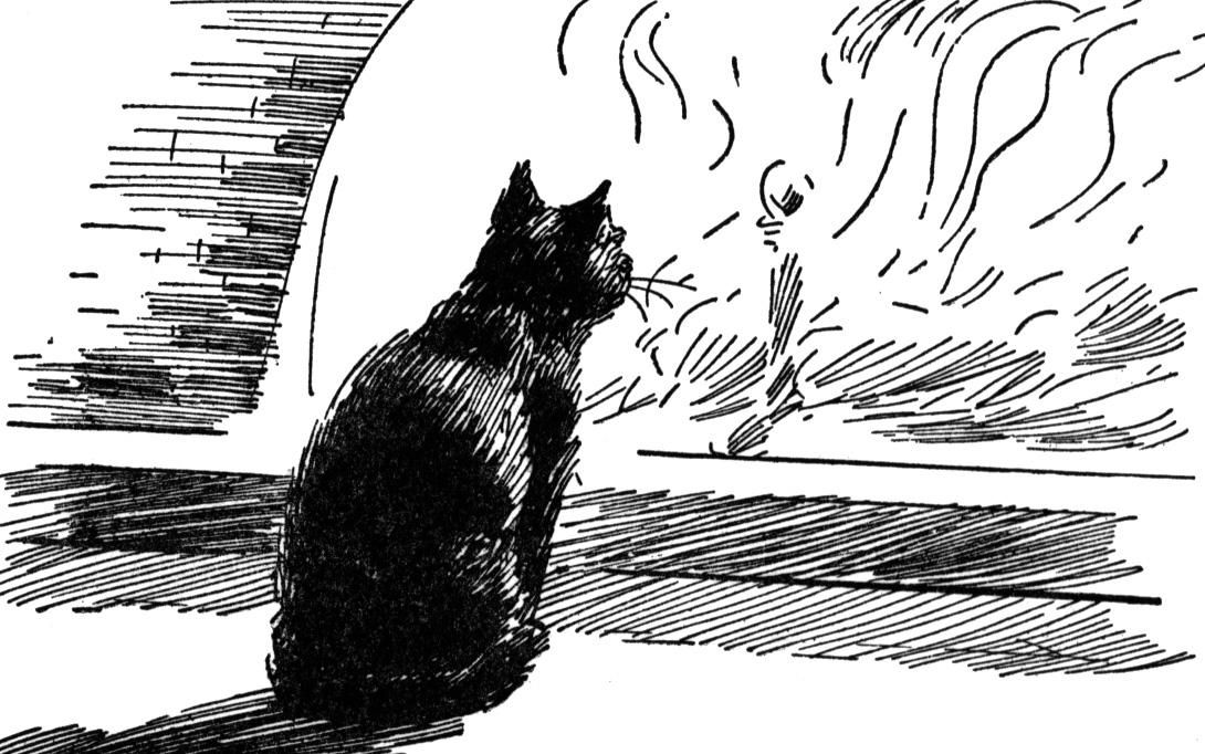 what are the differences and similarites between the black cat and the teel tale heart The black cat started from the confession of the man (the narrator) who loved animals since he was child because his parents love animals too he realized that the cat had supernatural power the second story is the tell-tale heart this story started from narration about the man (the narrator.