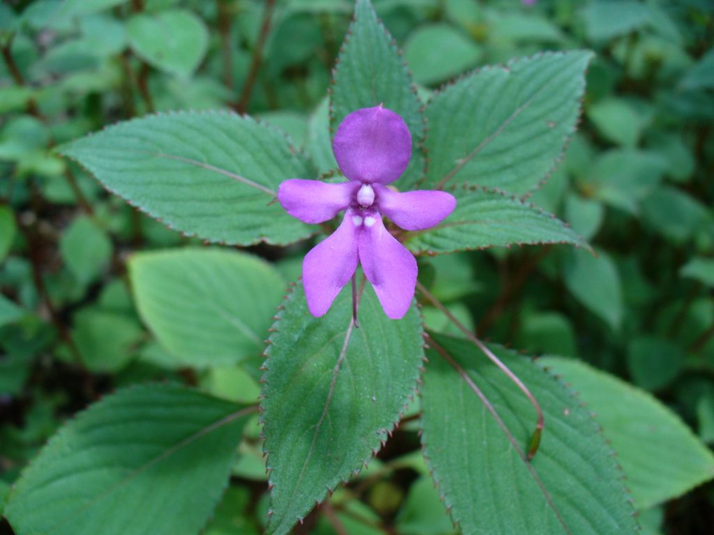 Floriography The Meaning Of 13 Little Known Flowers
