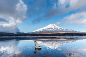 Fuji and Swan