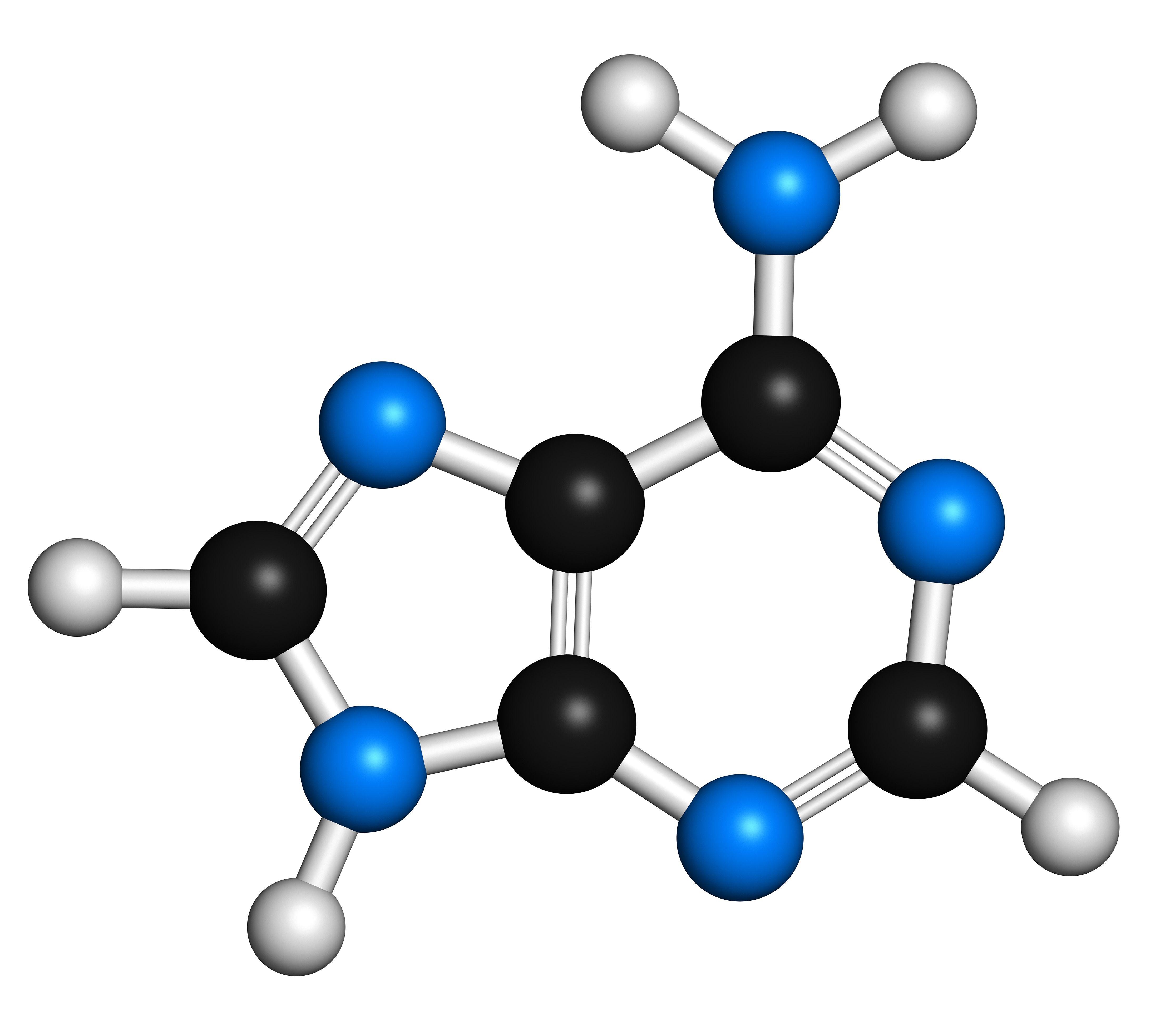 Adenine purine nitrogen base molecule
