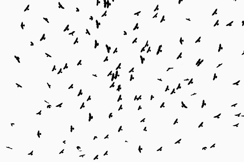 crows swarming overhead