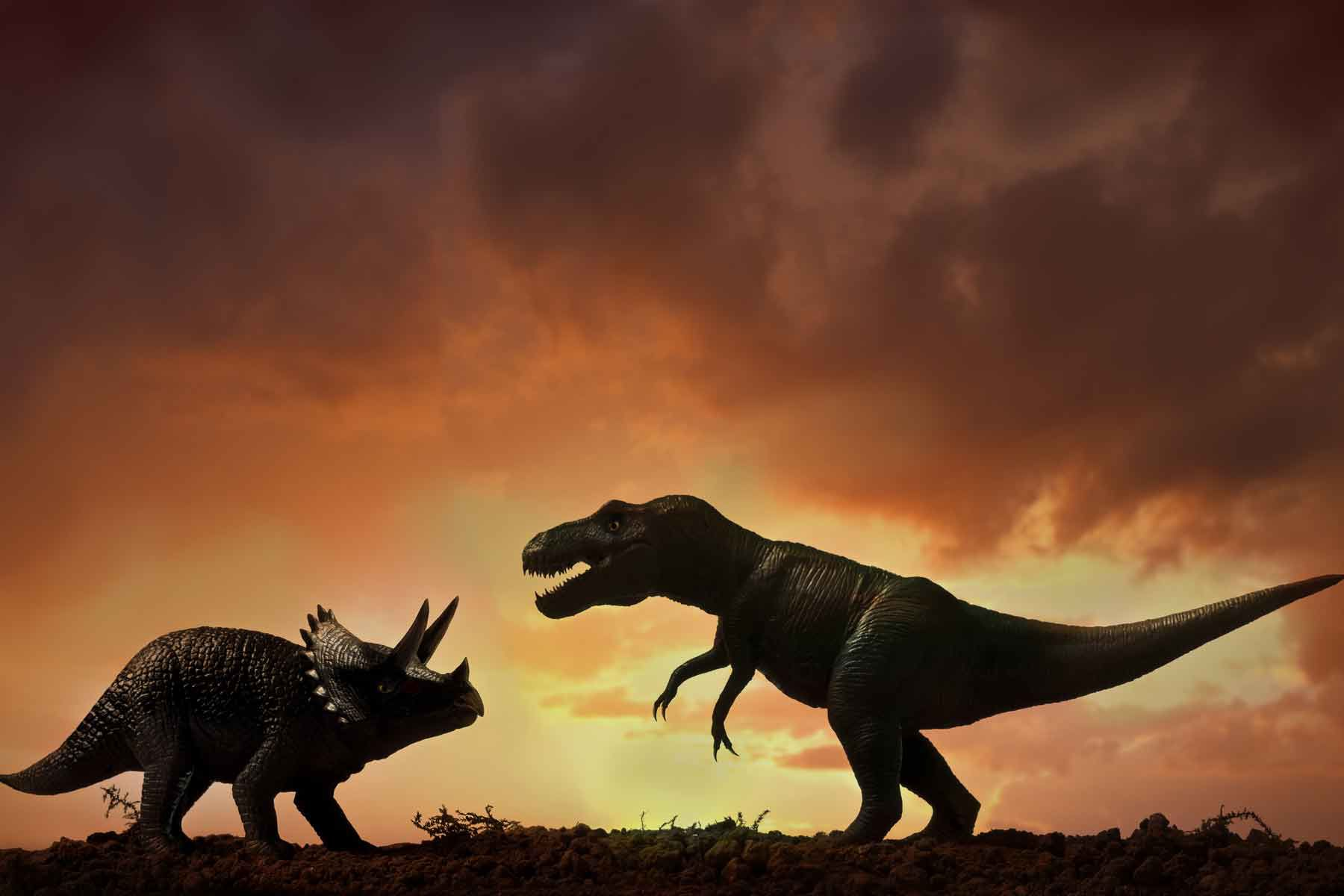 A Triceratops and a Tyrannosaurus Rex.