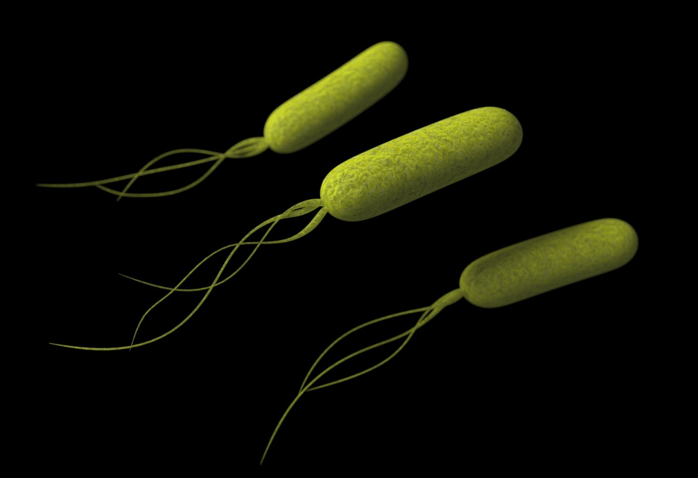 Pseudomonas Bacteria