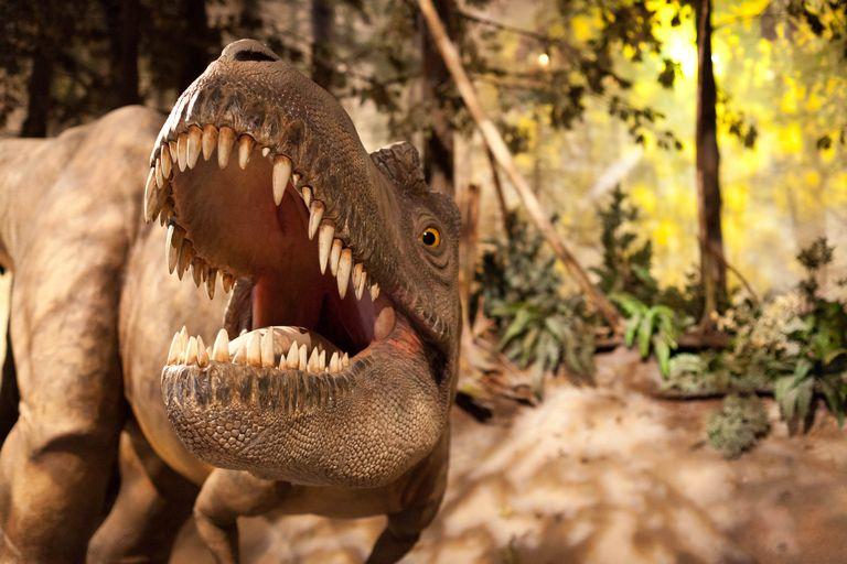 albertosaurus model in a museum