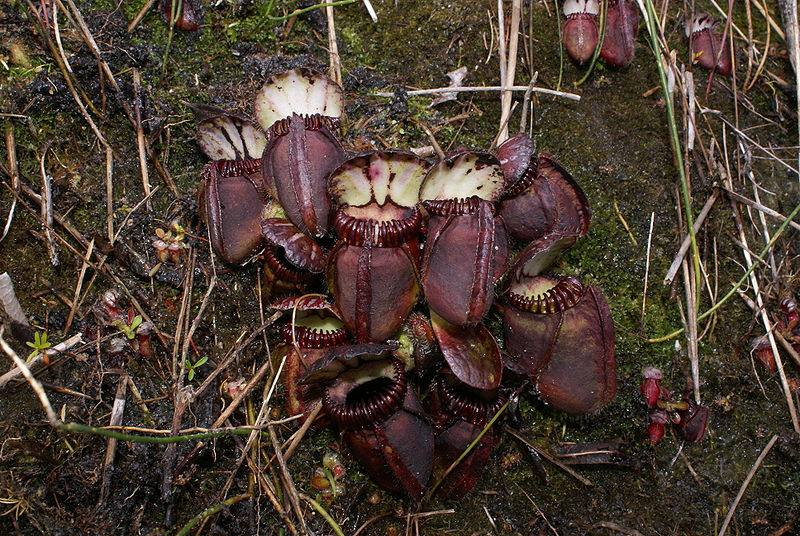 Learn About 12 Carnivorous Plants That Feast on Animals