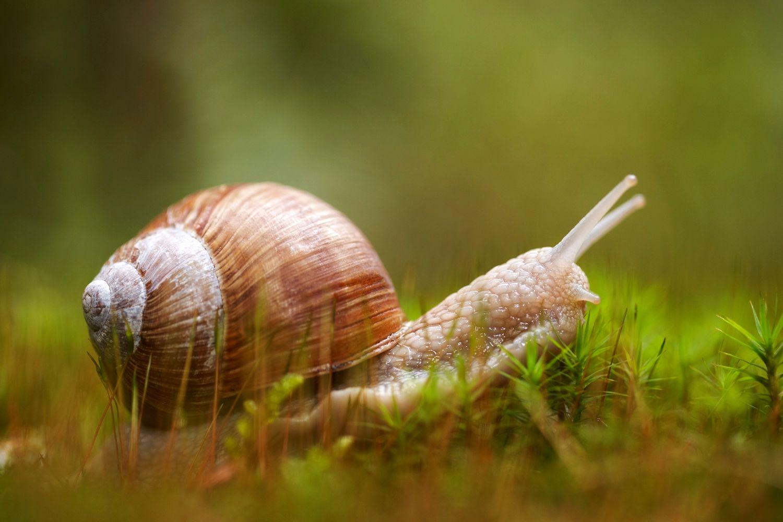 Snail in grass