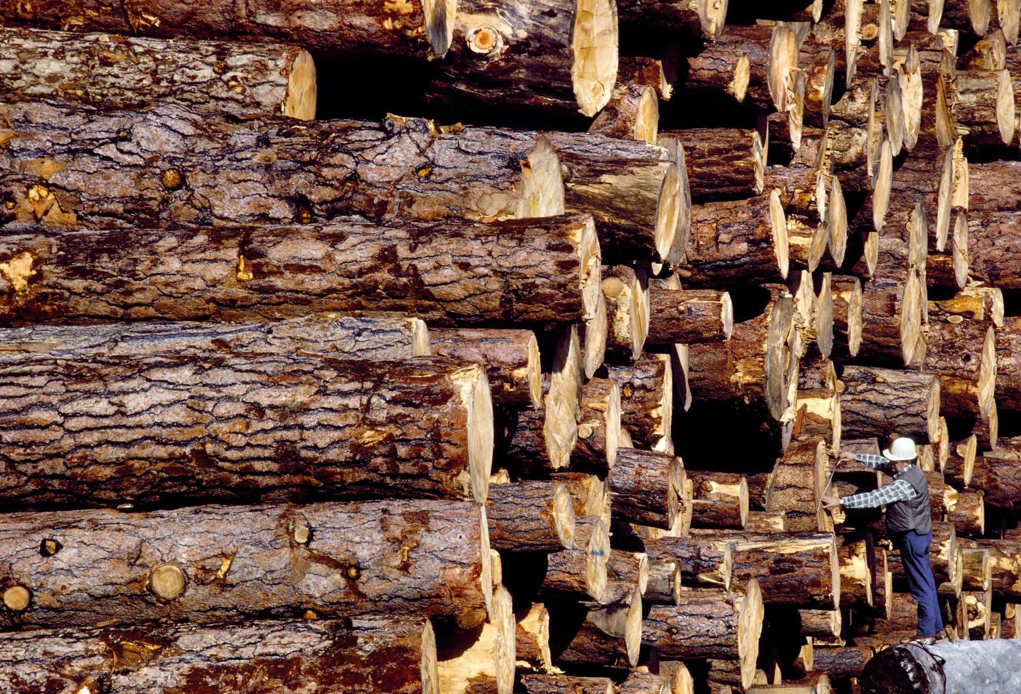 Measuring And Understanding Wood Volumes