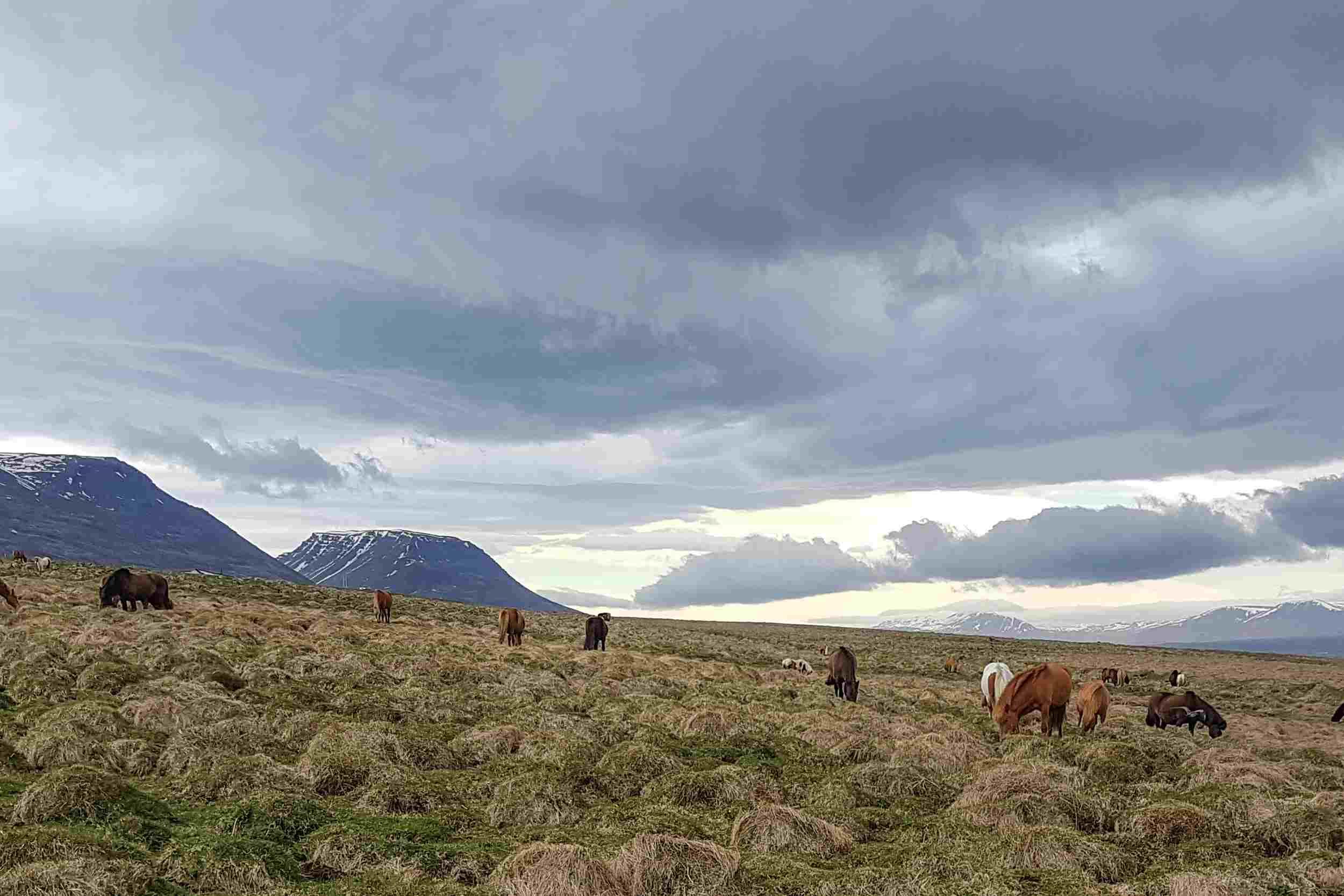 Landscape near Hofstadir, Iceland