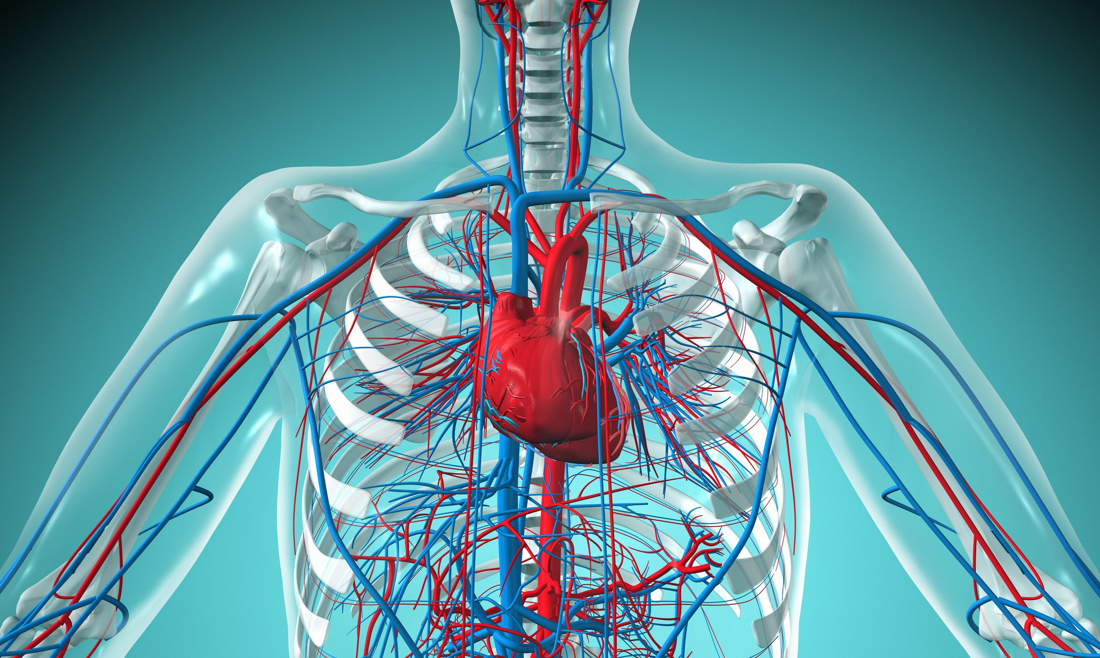 An Overview Of The Cardiovascular System Components