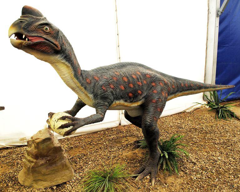 oviraptor