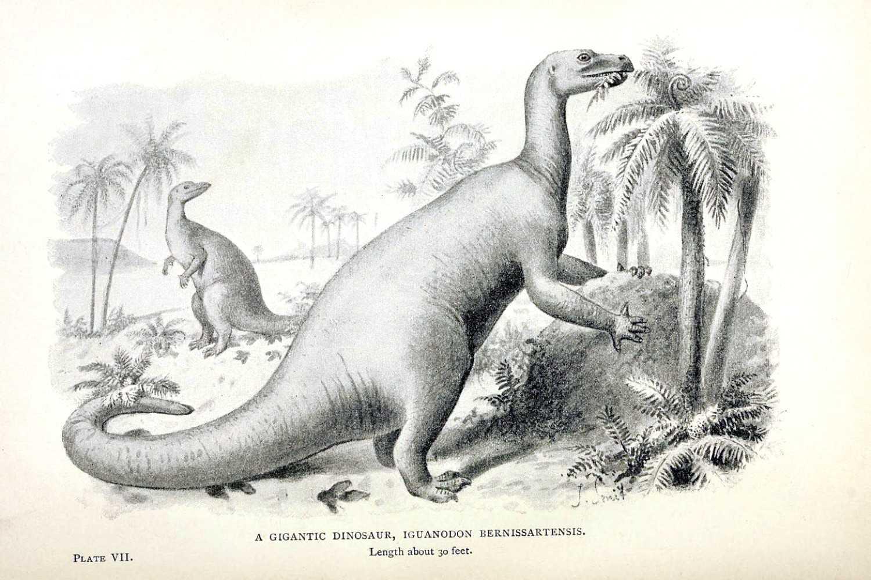 """El uganadon, conocido por dar el visto bueno, dibujado en el libro """"Monstruos extintos; un relato popular de algunas de las formas más grandes de la vida animal antigua"""""""