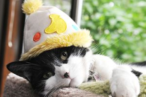 A cat wearing a hat