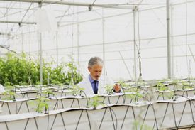 botanist examining plants in greenhouse