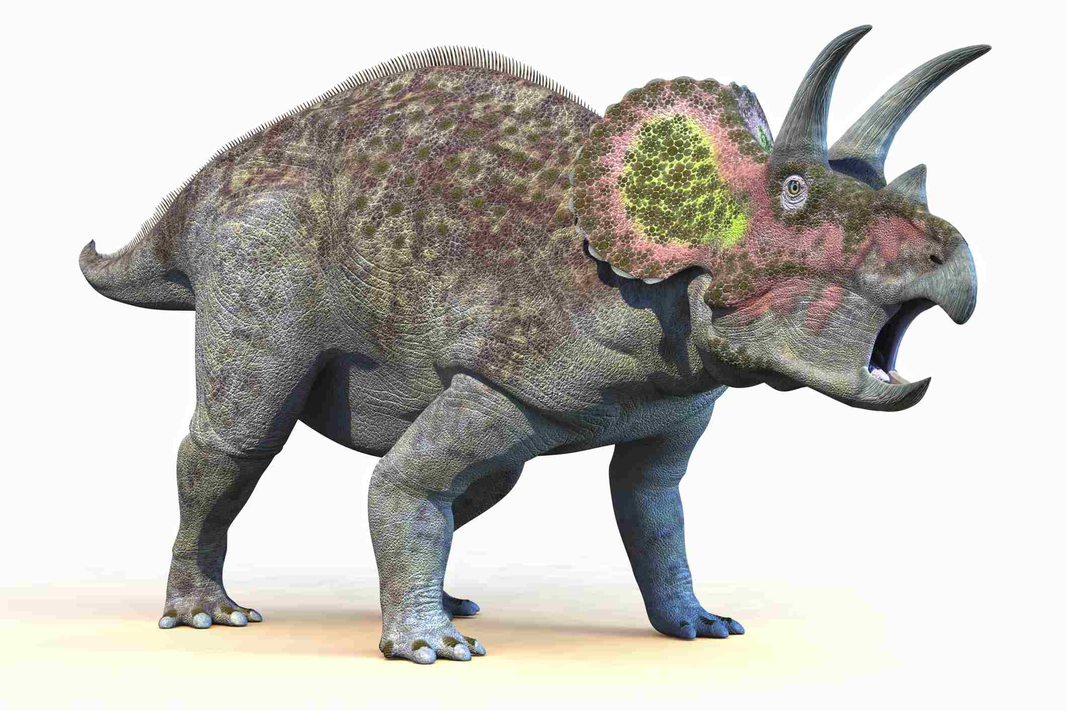 A colorful illustration of a triceratops dinosaur with a mouth wide open