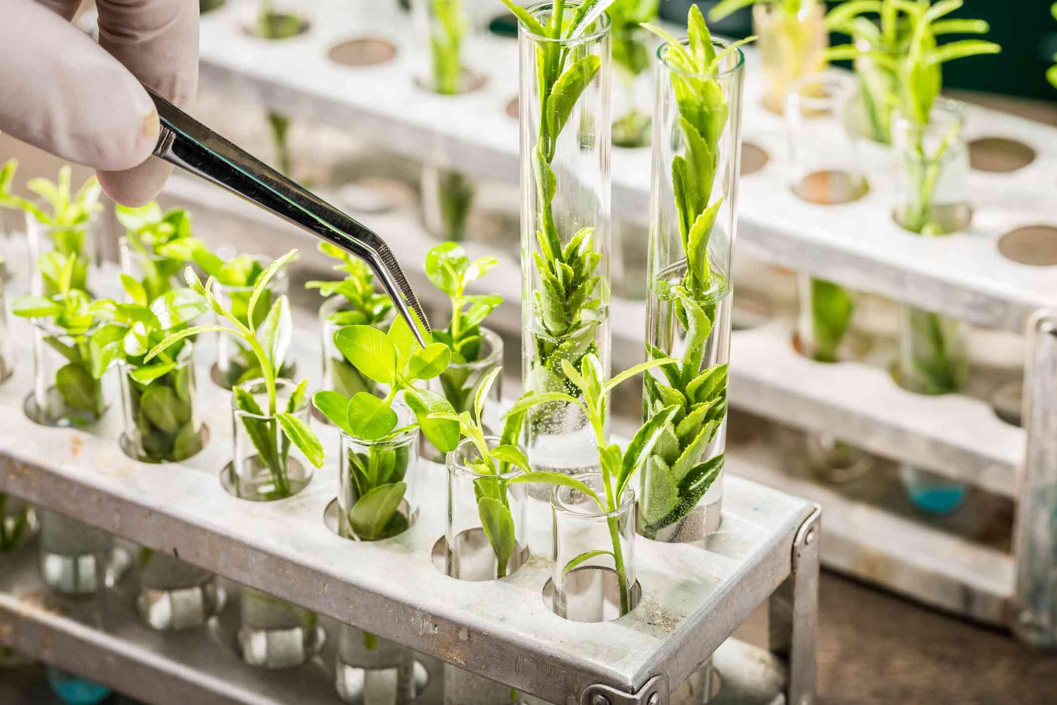 School lab exploring new methods of plant breeding - stock photo