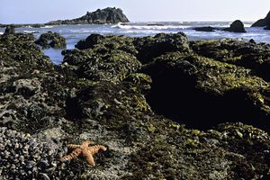 intertidal zone at low tide with star fish in foreground